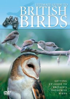 Ultimate Guide to British Birds